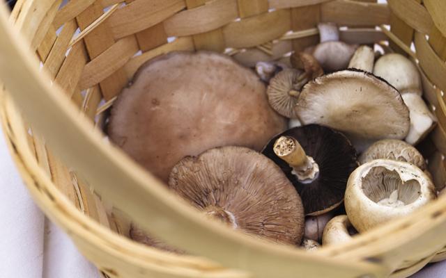 Mushroom-promo