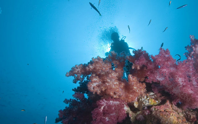 Zeavola Resort - Zaan Zanook Diving