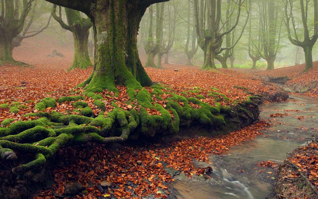 Gorbea_Natural_Park_Basque_Country_Spain