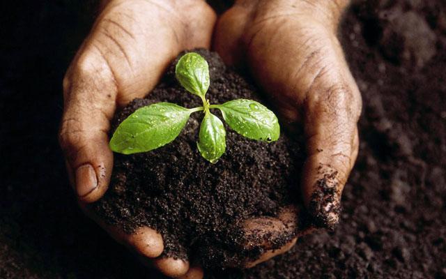 baby_plant
