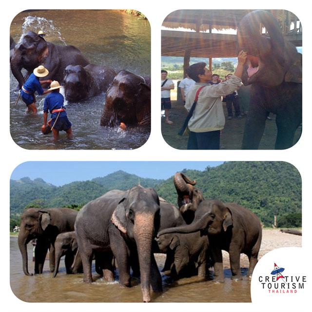 นฝึกควาญช้างบ้านช้างไทย