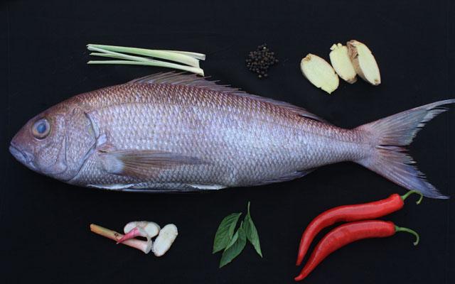 reBalinese Fish_2958