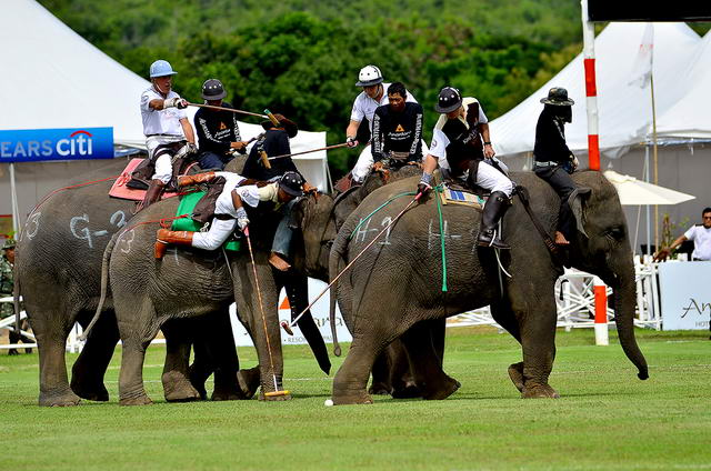 Anantara-V-Mercedes-Elephant-Polo