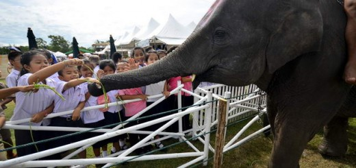 Children's Day at Elephant Polo