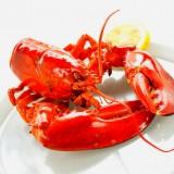 The Rain Tree Cafe - lobster
